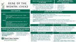CHEK2 by Division of Clinical Genetics - Miami Cancer Institute
